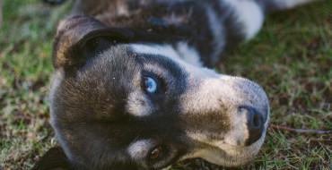 Akcija udomljavanja nezbrinutih životinja ove subote u Beogradu 2